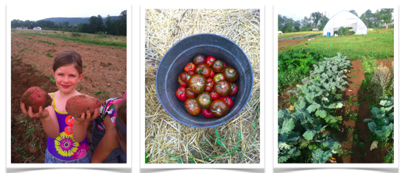 Potato Picker, Tomatoe Bucket, & a Farmscape